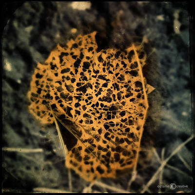 Photograph - Gold Leaf by Tim Nyberg