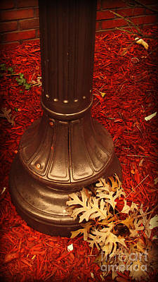 Photograph - Gold Red And Bronze Autumn by Miriam Danar