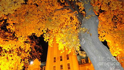 Gold Tree Original
