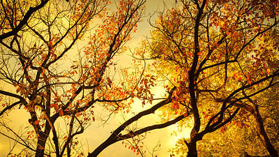 Clouds Rights Managed Images - Gold trees paint Royalty-Free Image by Southwindow Eugenia Rey-Guerra