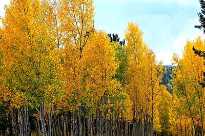 Photograph - Golden And Green Aspens by Marilyn Burton