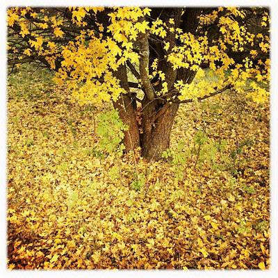 Landscapes Photograph - Golden And Yellow Autumn Leaves by Matthias Hauser