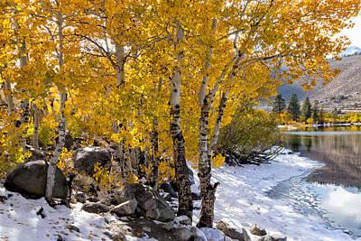 Kathleen Photograph - Golden Aspen Grove by Kathleen Bishop