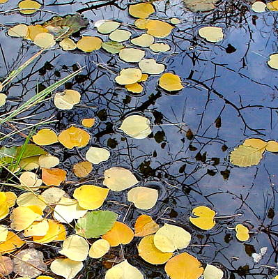 Photograph - golden Aspen leaves in the creek by Karon Melillo DeVega