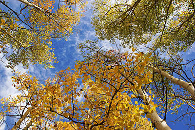 Photograph - Golden Aspens And Blue Sky by Daniel Woodrum