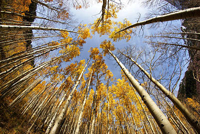 Photograph - Golden Aspens And Sky by Daniel Woodrum