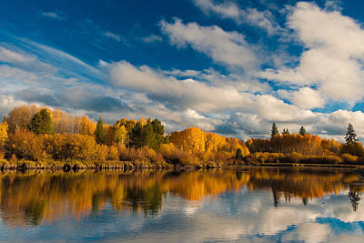 Deschutes River Photograph - Golden Aspens On The Deschutes River by Alvin Kroon