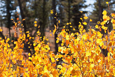 Photograph - Golden Autumn by Cindy Singleton