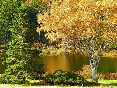 Photograph - Golden Autumn by Gene Cyr