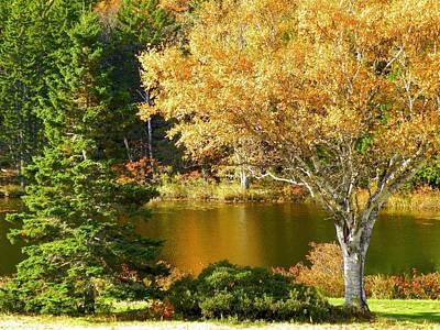 Photograph - Golden Autumn by Gene Cyr