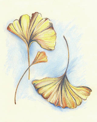 Pastel - Golden Autumn Ginkgo Leaves by MM Anderson