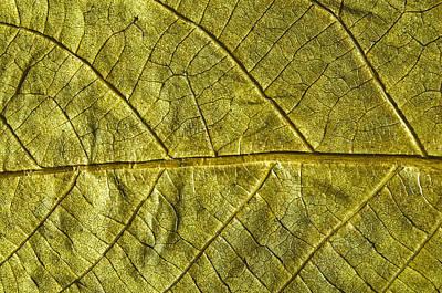 Golden Autumn Leaf Original