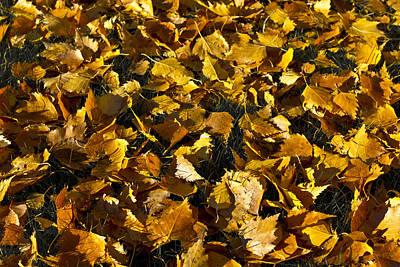 Photograph - Golden Autumn Leaves by David Pyatt