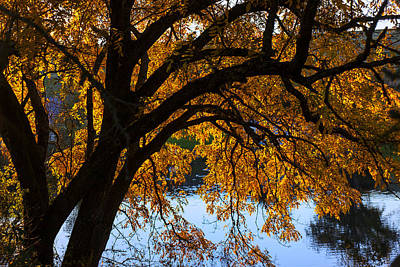 Golden Autumn Leaves Art Print by Garry Gay