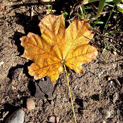 Photograph - Golden Autumn Maple Leaf by Conni Schaftenaar