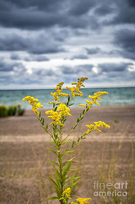 Photograph - Golden Beach by Jim McCain