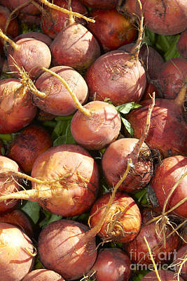 Photograph - Golden Beets by Tony Cordoza