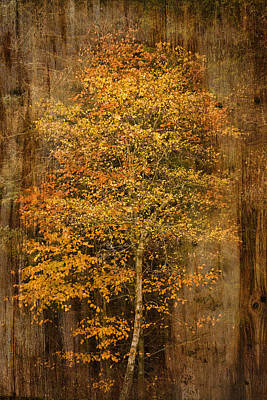 Golden Birch Art Print