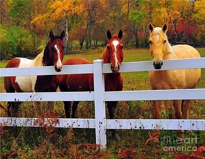 Autumn Photograph - Golden Boy And Girlfriends by Terri Gostola