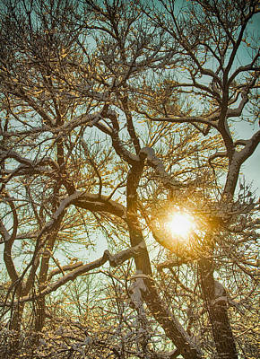 Photograph - Golden Branches In The Snow by James BO Insogna