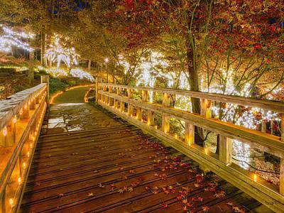 Palm Trees - Golden Bridge by Daniel George