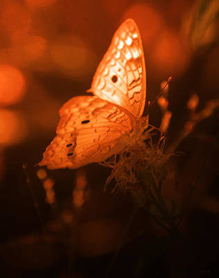 Photograph - Golden Butterfly by Leticia Latocki
