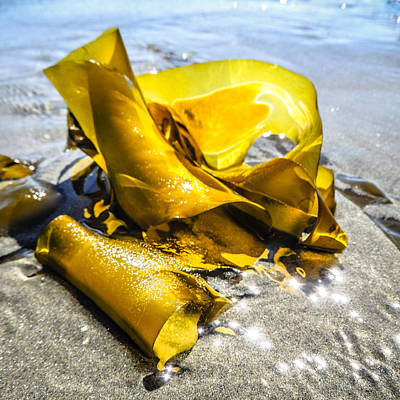 Photograph - Golden By The Sun  by Roxy Hurtubise