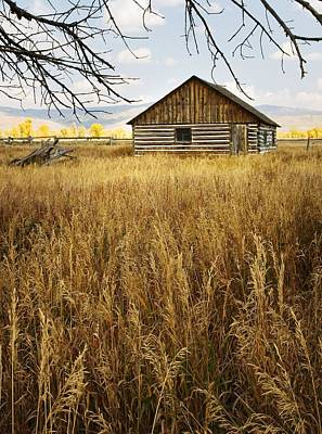 Photograph - Golden Cabin by Sonya Lang