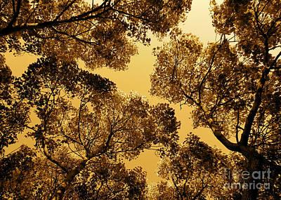 Golden Camphor Art Print