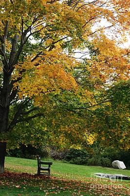 Photograph - Golden Canopy by Barbara Bardzik