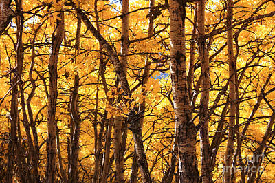 Art Print featuring the photograph Golden Canopy by Gerry Bates