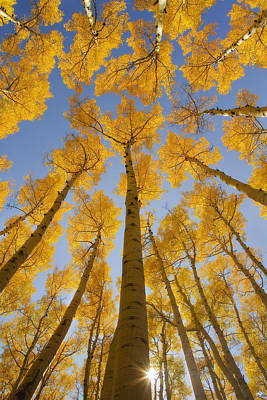 Peter James Nature Photograph - Golden Caps by Peter Coskun