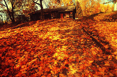 Photograph - Golden Carpet Of Fall  by Jenny Rainbow