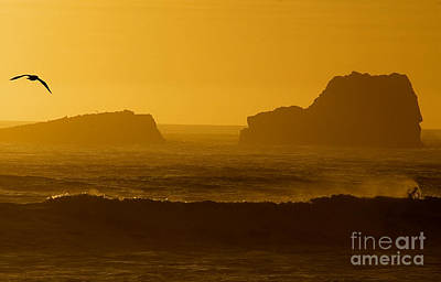 Photograph - Golden Coast by Kathleen Gauthier