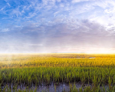Photograph - Golden Coastal Marshes At Dawn - Georgia by Mark E Tisdale
