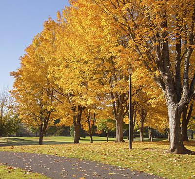 Golden Colors In Autumn Bellavista Park Oregon. Print by Gino Rigucci