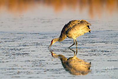 Golden Crane Reflections Art Print by Martha Marks