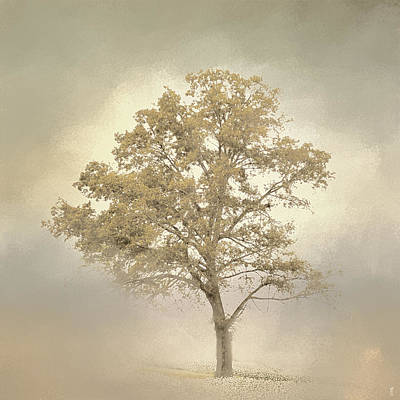 Photograph - Golden Cream Cotton Field Tree - Landscape by Jai Johnson