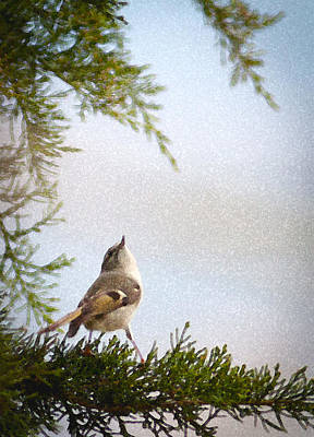 Eastern Red Cedar Wall Art - Photograph - Golden-crowned Kinglet by Melinda Fawver