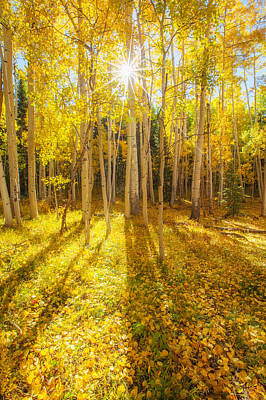 Fall Trees Photograph - Golden by Darren  White