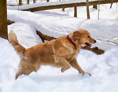 Golden Retriever Dog In The Snow Art Print by Delores Knowles