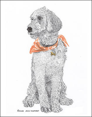 Golden Doodle Drawing - Trash Talking Golden Doodle by Jack Pumphrey