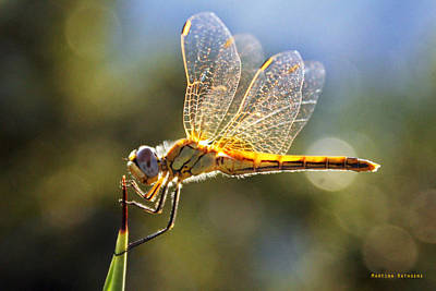 Golden Dragonfly Art Print by Martina  Rathgens