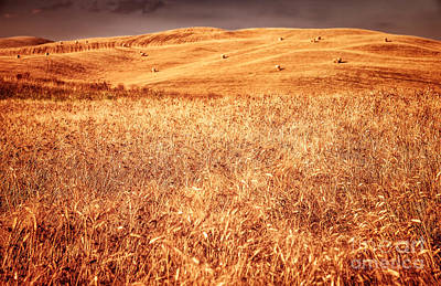 Photograph - Golden Dry Wheat Field by Anna Om