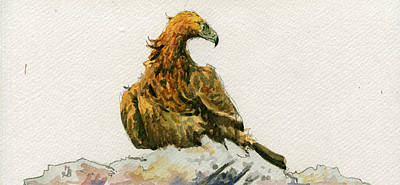 Nocturnal Painting - Golden Eagle Aquila Chrysaetos by Juan  Bosco