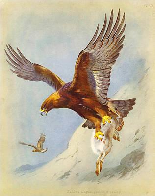 Golden Eagle Painting - Golden Eagle by Celestial Images