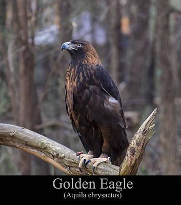 Digital Art - Golden Eagle by Chris Flees