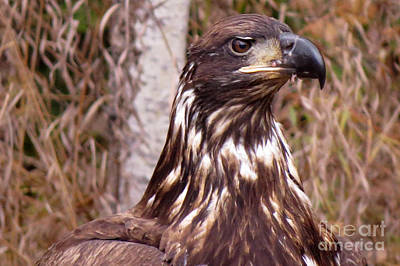 Photograph - Golden Eagle Head by Mary Mikawoz