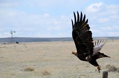 Photograph - Golden Eagle In Flight by Cascade Colors
