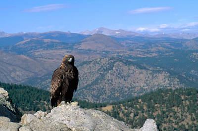 Eagle Photograph - Golden Eagle by Jeffrey Lepore
